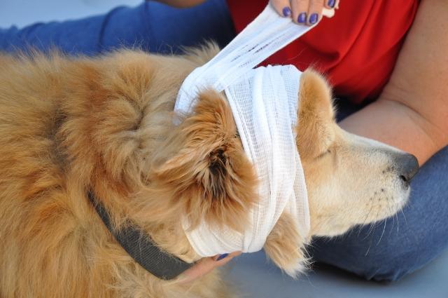 Pet First-Aid & CPCR Class LIVE Online (Dec Teleconference)