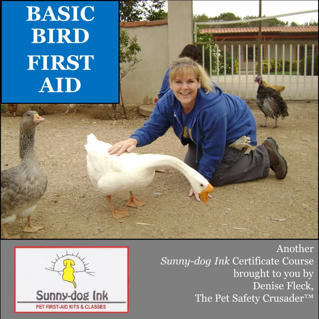 BASIC BIRD FIRST AID
