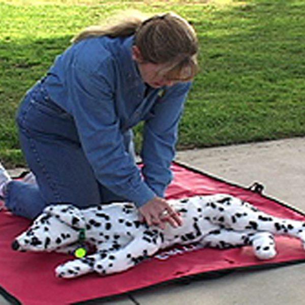 Instructor Denise Fleck demonstrates CPR on a Canine Mannekin
